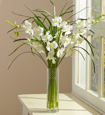 White Silk Dendrobium Orchids