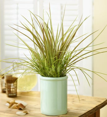 Potted Silk Grass Mix
