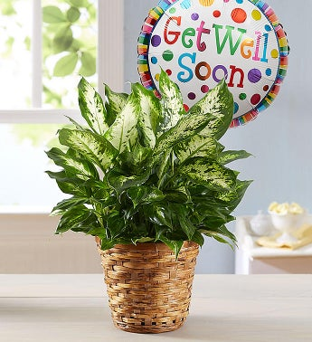 1-800-Flowers.com Get Well Green Plant with Balloon - 1-8...