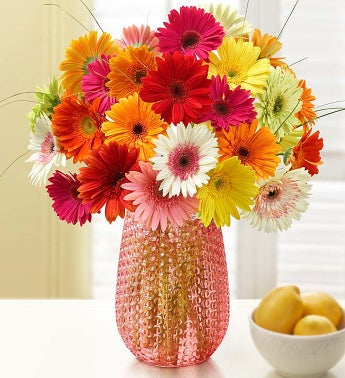 Happy Gerbera Daisies, 12-24 Stems - 24 Stems with Pink V...