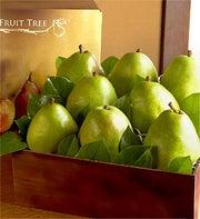 Succulent Comice Pears Grande Fruit Gift Basket