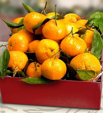 Satsuma Mandarin Oranges Holiday Gift Box