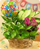 Happy Birthday Blooming Dish Garden Shop Now