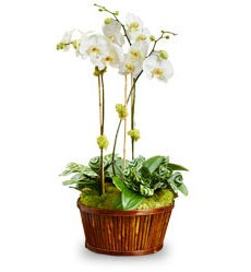 White Orchid Bamboo Garden by Real Simple®